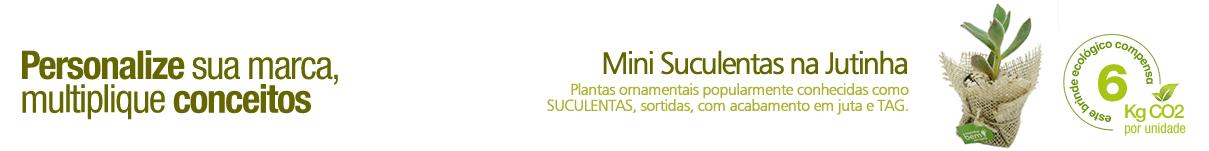 TI_SUCULENTAS