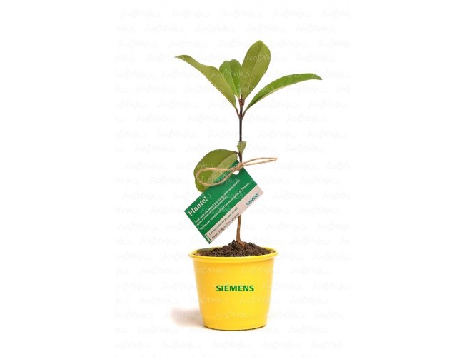 BABY TREE CACHEPÔ